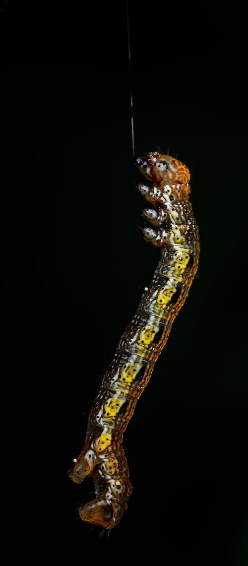 Fotobanka sbezplatnými fotkami na tému hmyz, húsenica, internet, makro