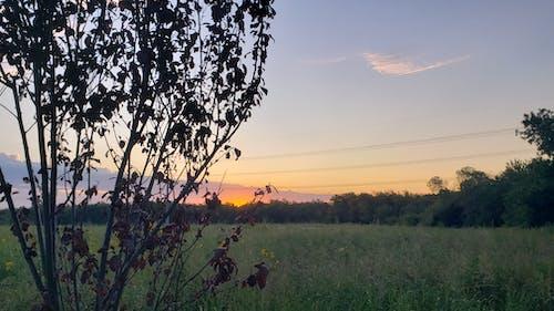 Foto d'estoc gratuïta de alba, cel, natura