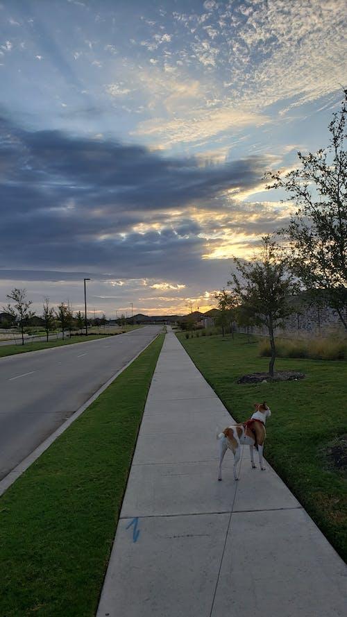 Foto d'estoc gratuïta de alba, gos, natura, núvols