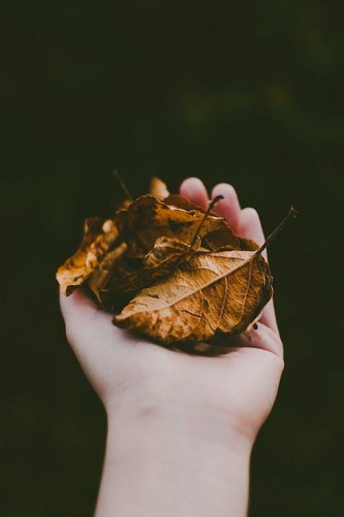 Gratis arkivbilde med blader, farger, fokus, hånd