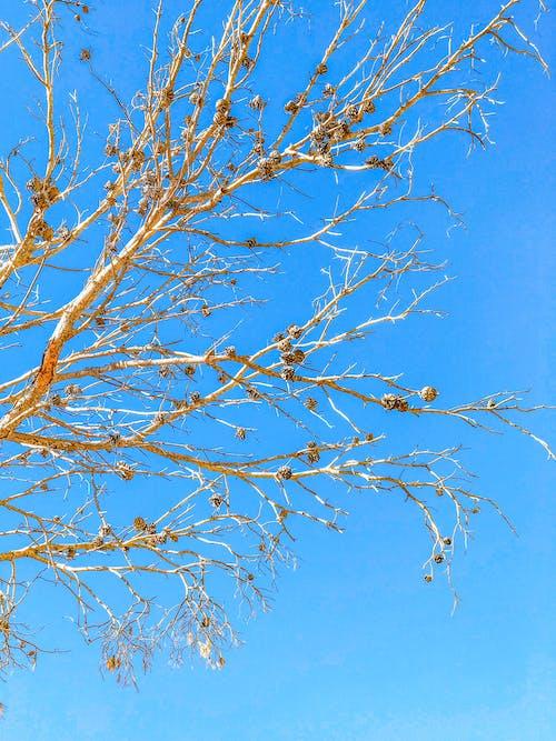 ağaç, düşmek, güz, Mavi gökyüzü içeren Ücretsiz stok fotoğraf