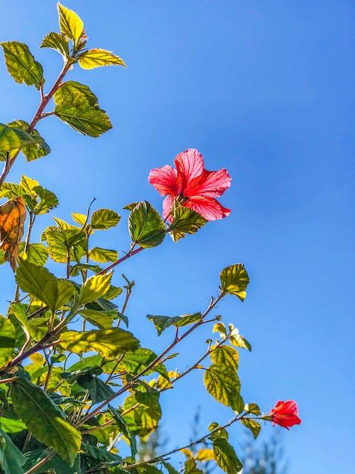 çiçek, doğa, güzel çiçek, kırmızı çiçek içeren Ücretsiz stok fotoğraf