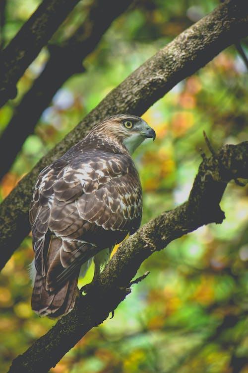 木の上の茶色の鷹