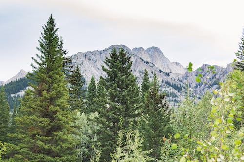 屋外, 山, 岩山, 木の無料の写真素材