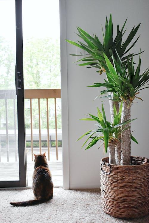 Безкоштовне стокове фото на тему «завод, кішка, критий завод»