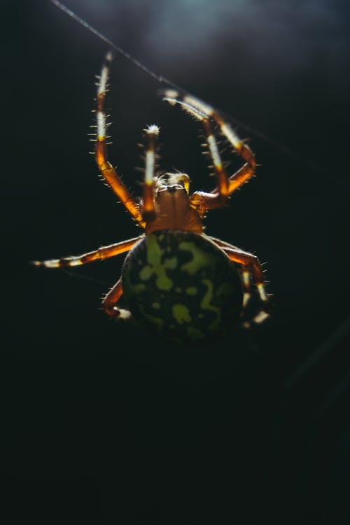 Green And Brown Spider