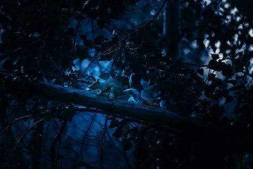 Бесплатное стоковое фото с белка, голубой, цветовая гамма