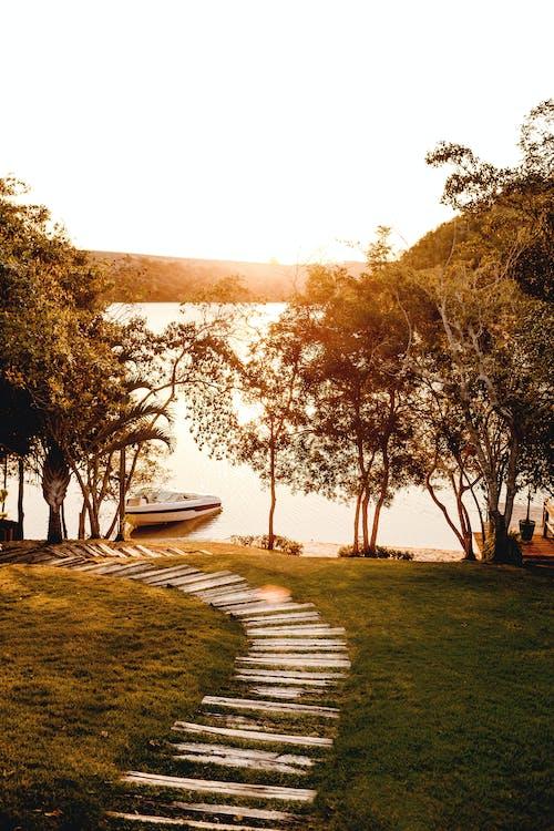 Gratis stockfoto met bomen, dageraad, gebied met water, gras