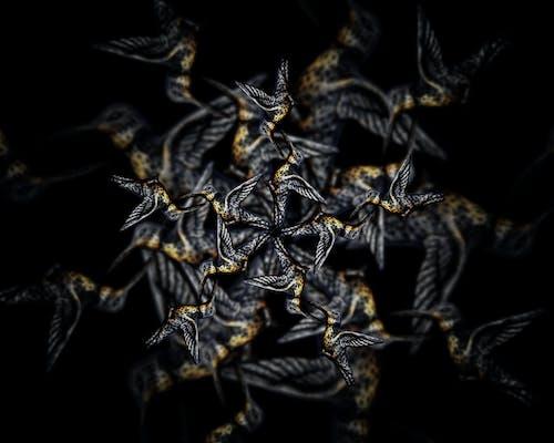 Бесплатное стоковое фото с Adobe Photoshop, дизайн, колибри