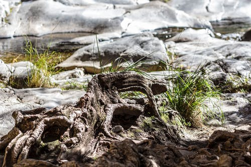 초록 자연의 무료 스톡 사진