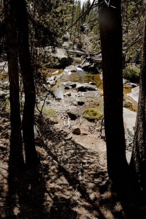 Imagine de stoc gratuită din apă curgătoare, arbori, curent, în aer liber