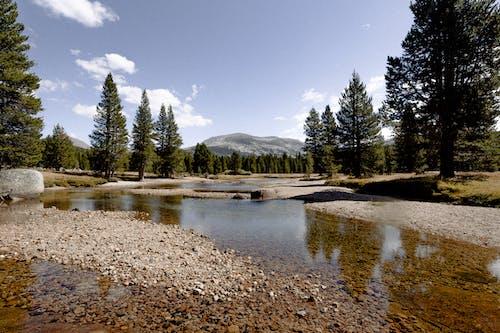 Kostnadsfri bild av Granar, höga träd, landskap, naturfotografering
