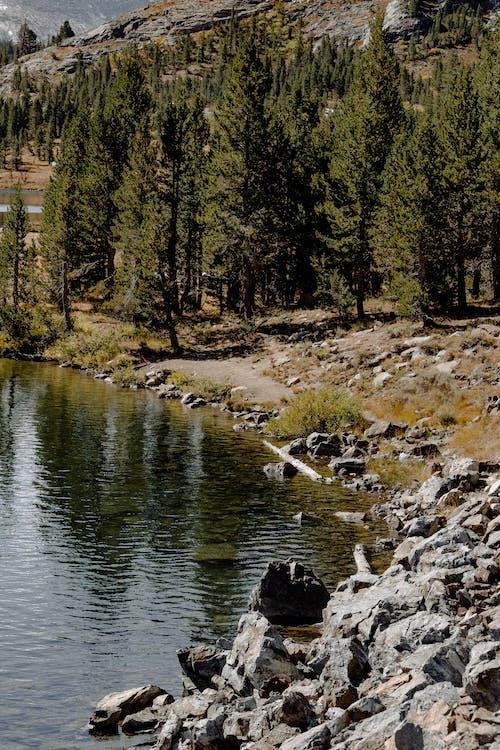 Ilmainen kuvapankkikuva tunnisteilla järvi, joki, kivet, puut