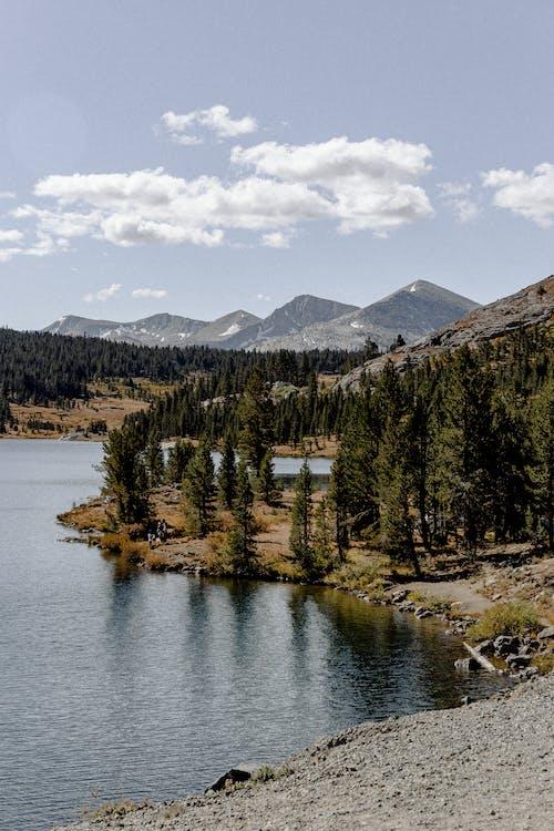 Darmowe zdjęcie z galerii z drzewa, góra, jezioro, krajobraz