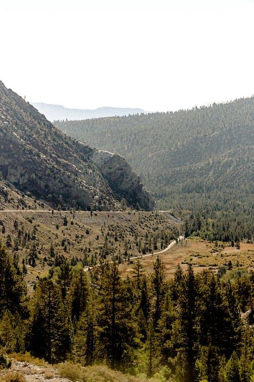 Безкоштовне стокове фото на тему «високий, гілки дерев, гірська місцевість, гірський хребет»
