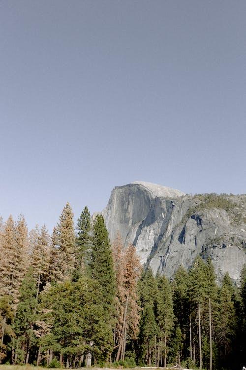 Δωρεάν στοκ φωτογραφιών με ανάπτυξη, βουνό, γραφικός, δασικός