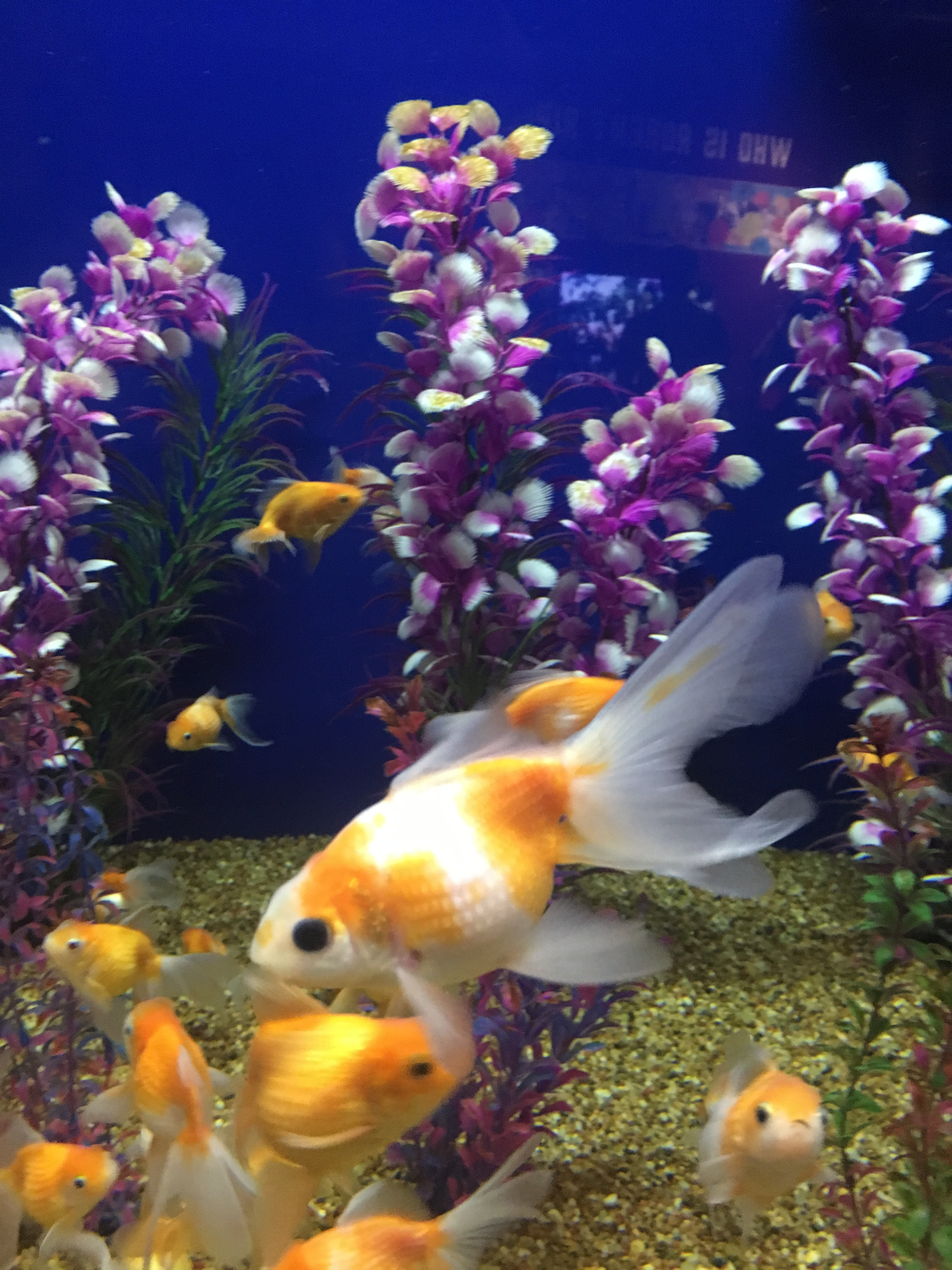 Free Stock Photo Of Aquarium Fish