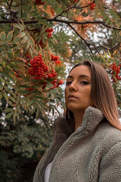 Foto profissional grátis de árvore, cânone, colocar, consequência