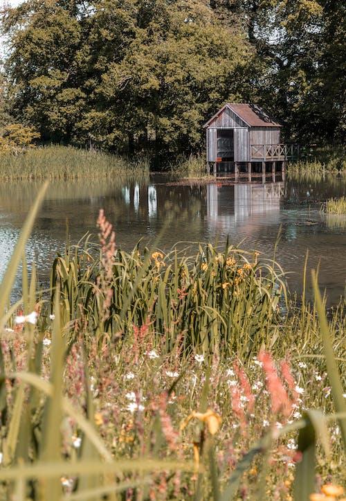 Foto profissional grátis de água, árvore, cânone, casa