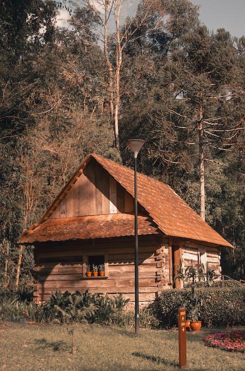 Foto d'estoc gratuïta de a l'aire lliure, arbres, arquitectura, bosc