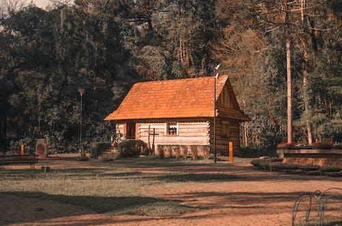 Foto d'estoc gratuïta de a l'aire lliure, arbres, arquitectura, banc