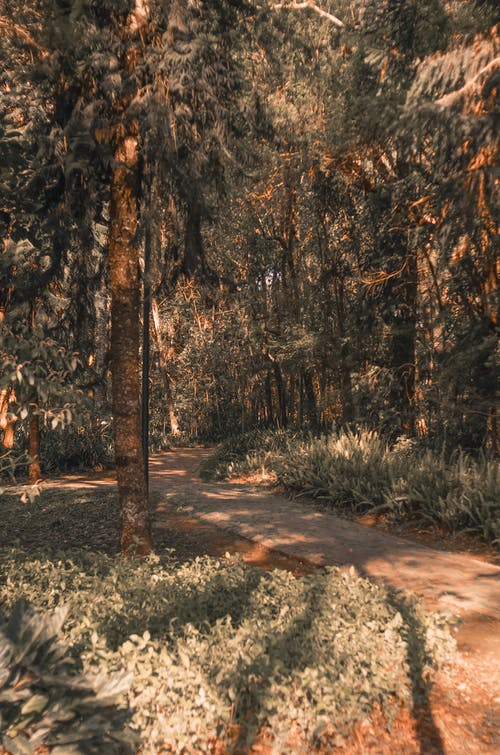 Foto stok gratis alam, cuaca, di luar rumah, hijau