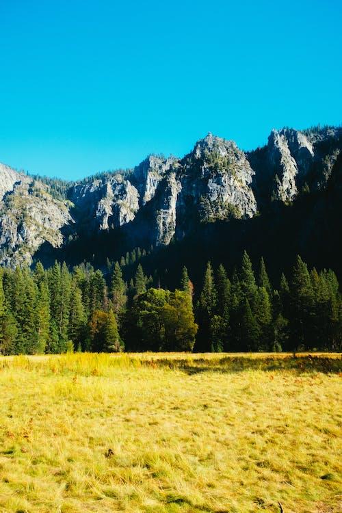 경치, 경치가 좋은, 녹색, 농촌의의 무료 스톡 사진