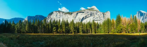 Green Trees and Rocky Mountain