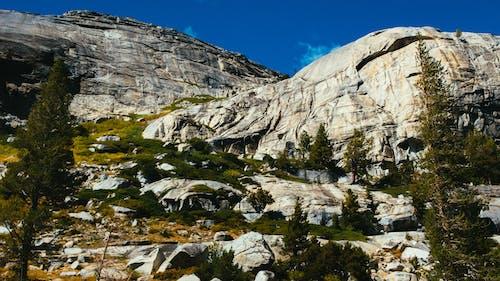 Kostenloses Stock Foto zu abenteuer, alpin, aufnahme von unten, bäume