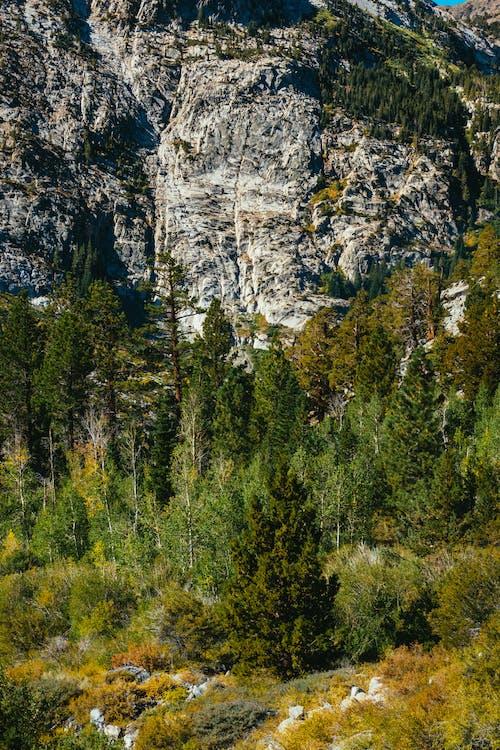 Green Trees Near Gray Rock Cliff