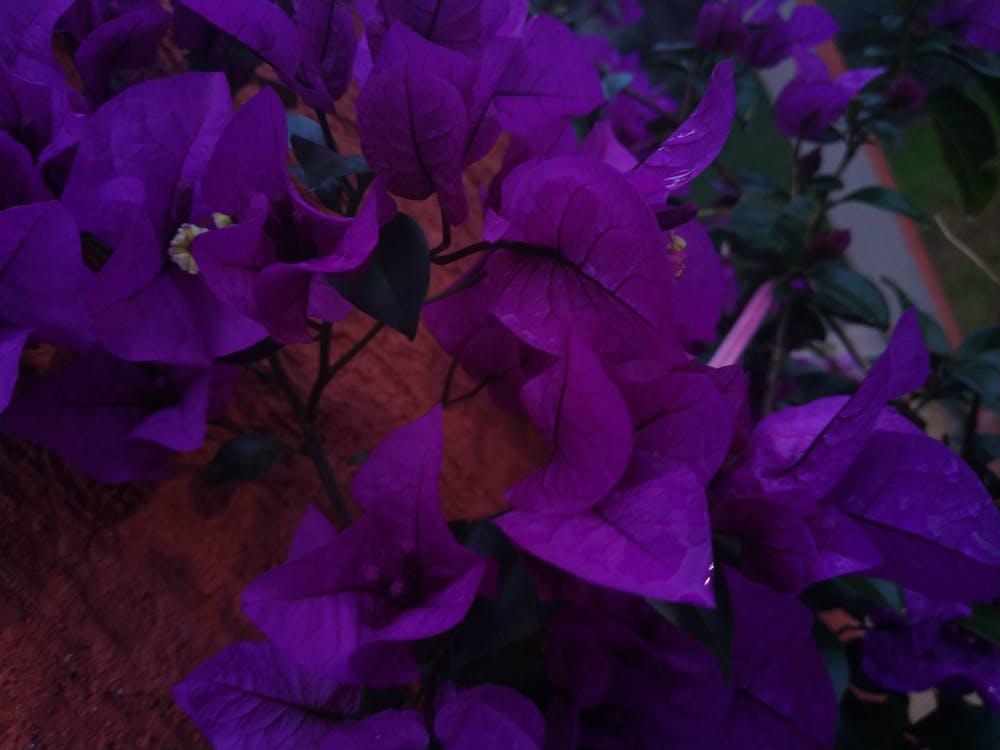 nádherné kvety, purpurové kvety