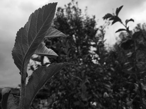 Ingyenes stockfotó fekete-fehér, gyárak témában