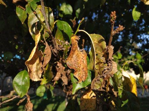 Gratis stockfoto met dode bomen, herfstkleuren, omvallen