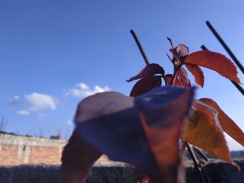 Gratis stockfoto met blauwe lucht, bloeiende rozen, fabrieken