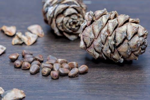 견과류, 라바콘, 소나무 견과류의 무료 스톡 사진
