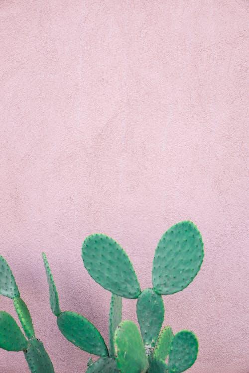 Imagine de stoc gratuită din cactus, cu țepi, plantă