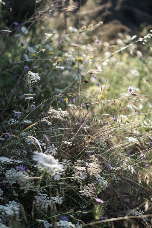 Immagine gratuita di campo, erba, impianto