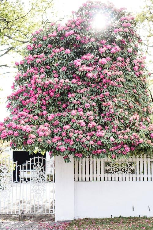 HD 바탕화면, 게이트, 꽃, 꽃 바탕화면의 무료 스톡 사진