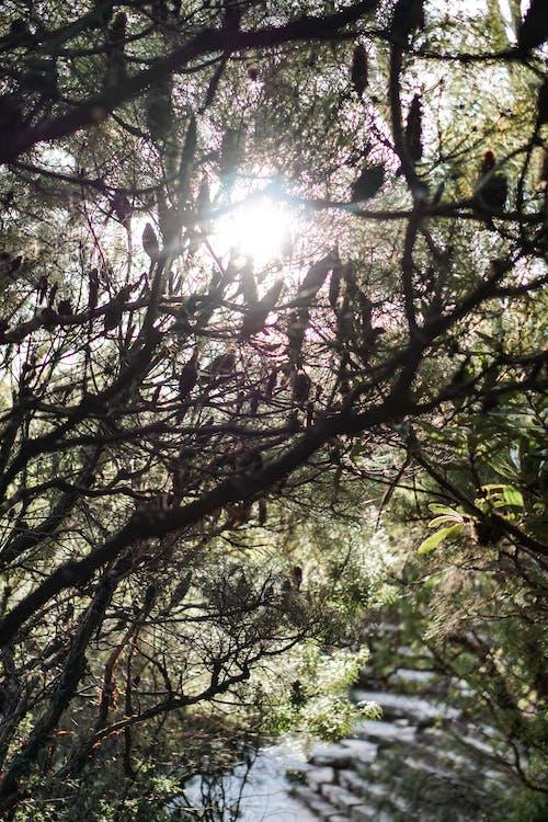 Foto stok gratis bayangan hitam, cabang, sinar matahari