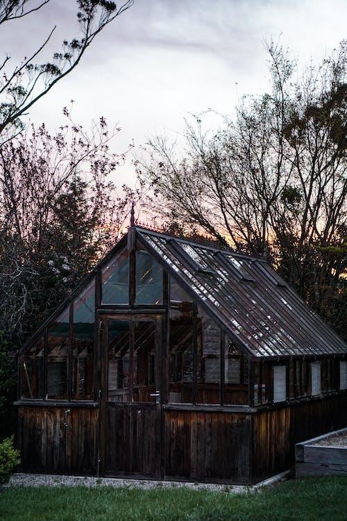 arbres, architecture, cabane