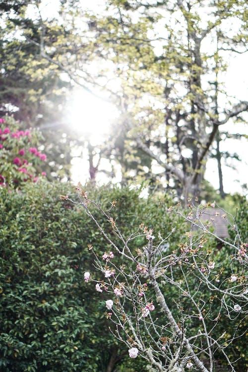 Foto d'estoc gratuïta de a l'aire lliure, Apple, arbre, branca