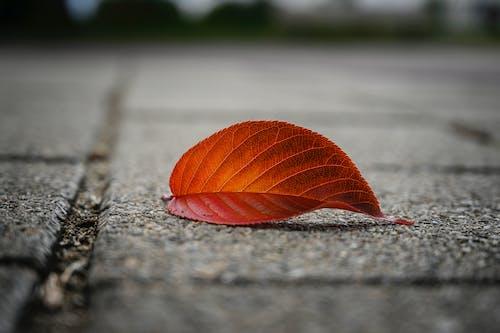 Бесплатное стоковое фото с лист, падать, цвета осени