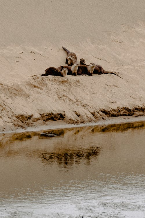 Seals Near Water