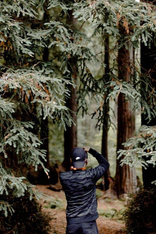Imagine de stoc gratuită din anotimp, arbori, arbori veșnic verzi, codru