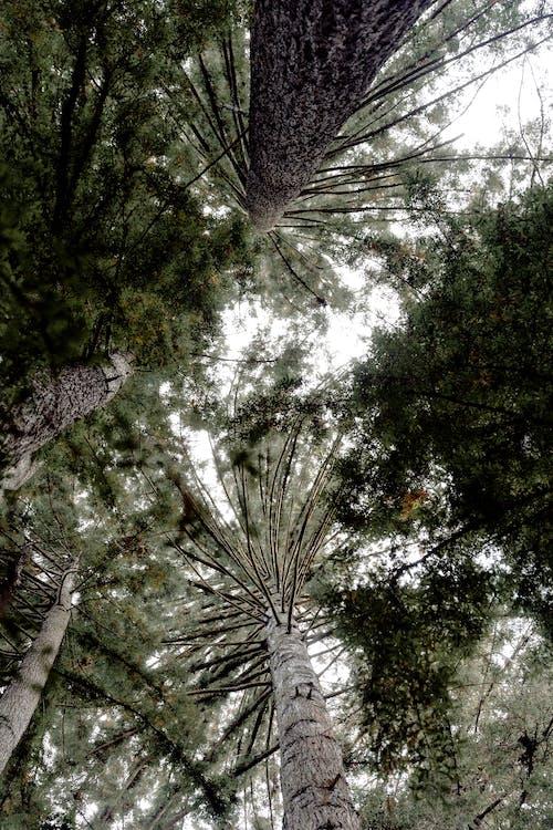 arbres, bois, branches d'arbre