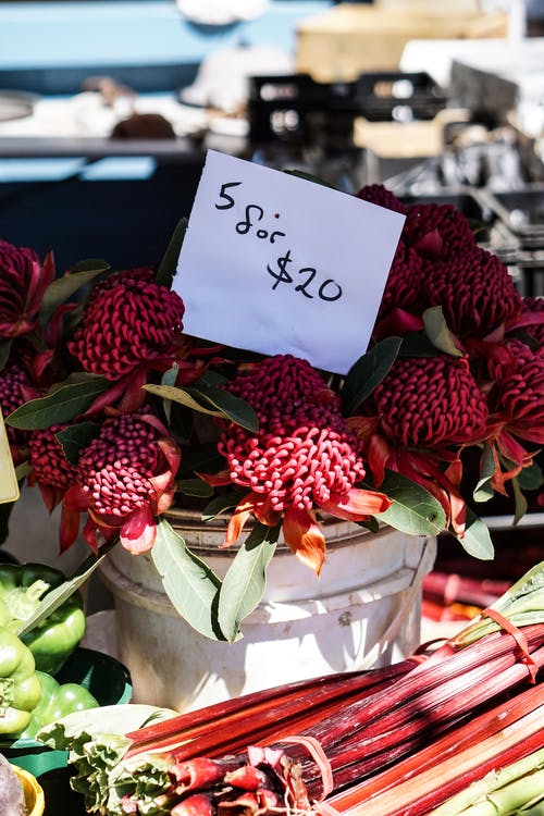 꽃, 꽃잎, 쇼핑, 식물의 무료 스톡 사진