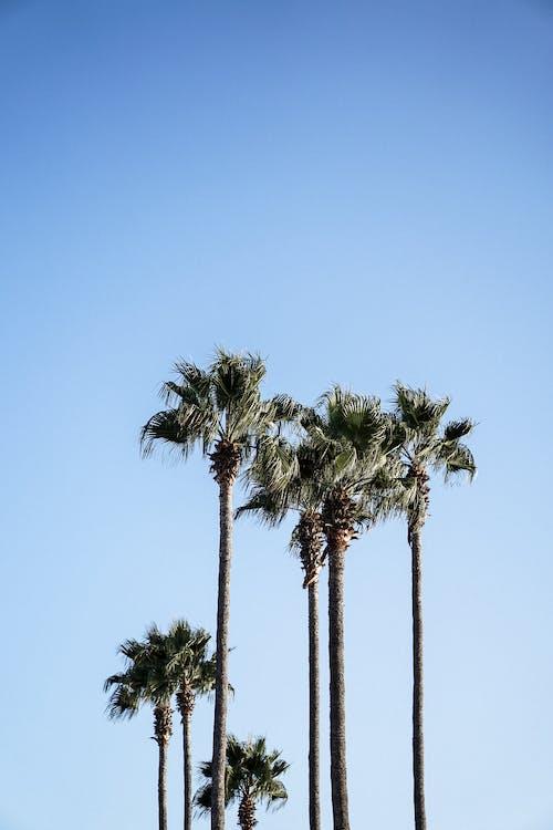 blå himmel, blader, dagslys
