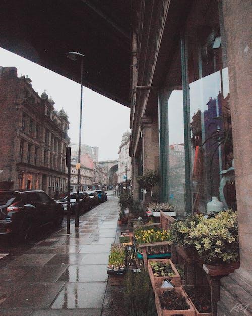 Foto d'estoc gratuïta de carrer, ciutat, flors, fotografia urbana