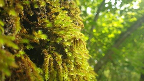 Бесплатное стоковое фото с после дождя, природа, трава