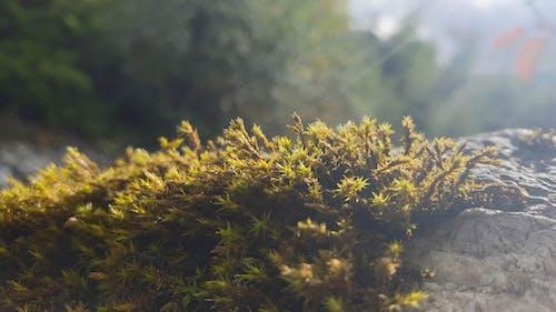 Бесплатное стоковое фото с природа, река, рок, трава